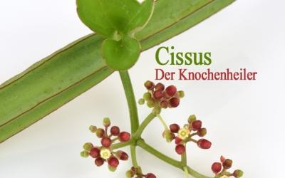 Cissus - der Knochenheiler