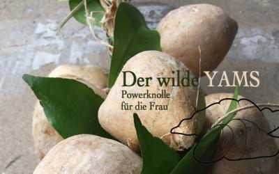 Der wilde Yams. Powerknolle für die Frau