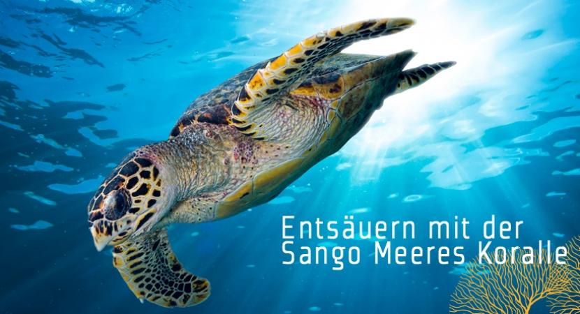Entsäuern mit der Sango Meeres Koralle